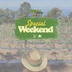 Special WEEKEND GREEN HUB